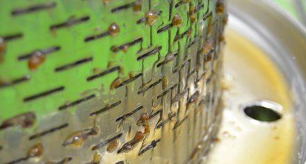 Lisování hustého nektaru z rozinek
